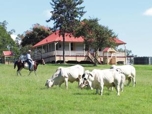 'Lofgren's Farms' - Mount Crosby, Brisbane - Mount Crosby