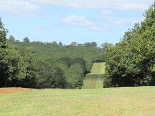 Maleny Macadamia Farm - Receivers and Managers Appointed - Maleny