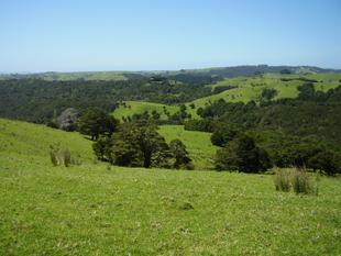 AWANUI 3 BLOCKS OF LAND - Kaitaia