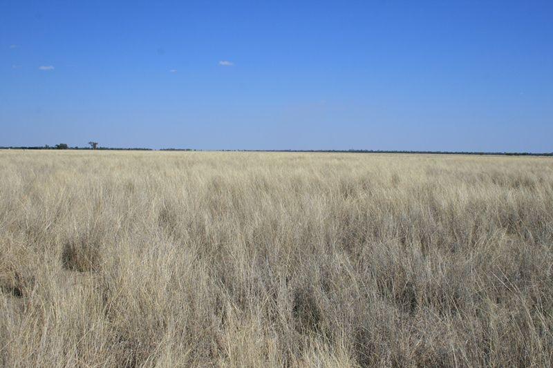 Wyandra Qld Rural Rural Livestock Property Sold