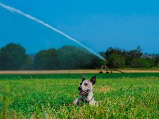 Nearly 300 Acres of Irrigation Paradise - Rosevale