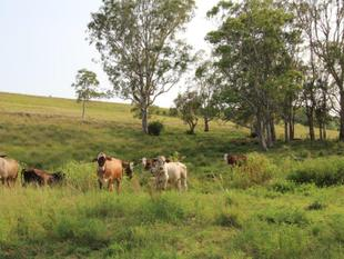 40 acre Lifestyle Property close to town - Lismore