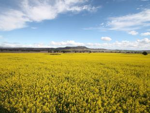123 AC, VIEWS & DWELLING ENTITLEMENT - Quirindi
