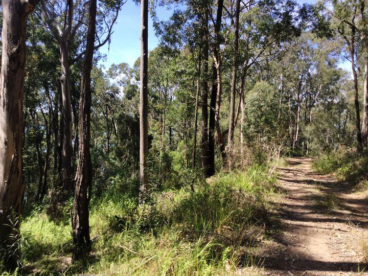 Lot 1731 Allandale Crescent, North Arm Cove, NSW