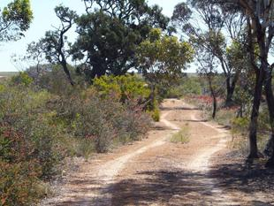 Attractive Bush Acreage - Hopetoun