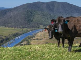 Northern Rivers cattle property. Unfortunate relocation dictates sale. - Coombadjha