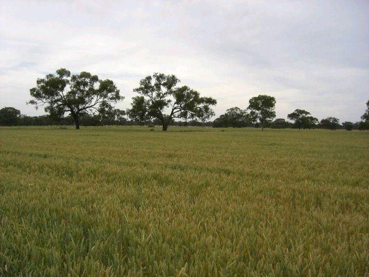 1087 Tueloga Road, Dilpurra, NSW