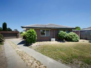 Family Home with Tremendous Outdoor Potential - lawn mowing included - Scoresby