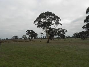 Warm Grazing w/- Expansive Loamy Flats - Western Flat