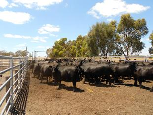 Grazing to suit all Options - Cattle Sheep, Large Acreage, Add-on/Starter - Bangham
