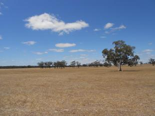 Large Scale Grazing Opportunity - Bordertown