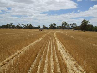 Flexible Farming Opportunity - Bordertown