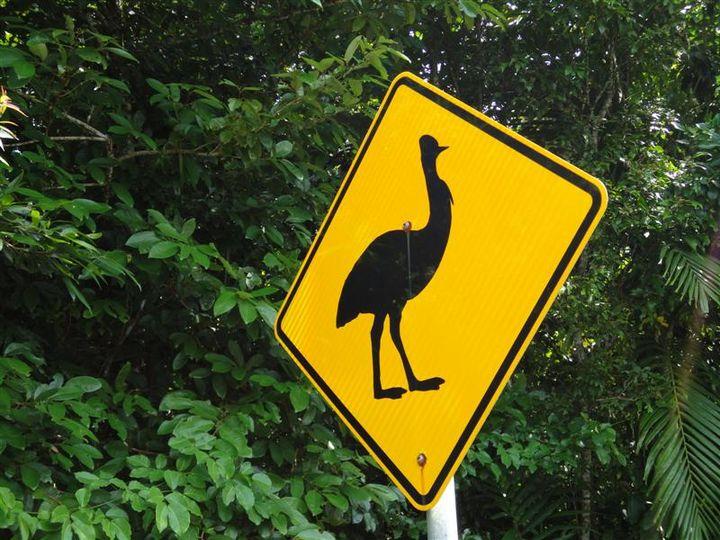Bingil Bay, QLD