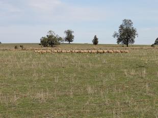 Exceptional Grazing and Farming Opportunity - Balladoran