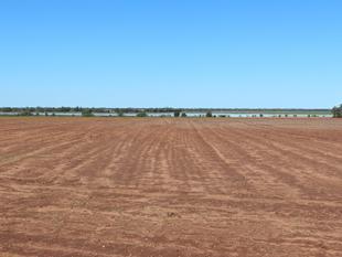 Receivers Auction Top Quality Scrub Soils - Springsure