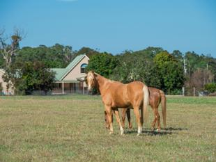 Best of Both Worlds - Fraser Coast Property Must Be Sold - Dundowran