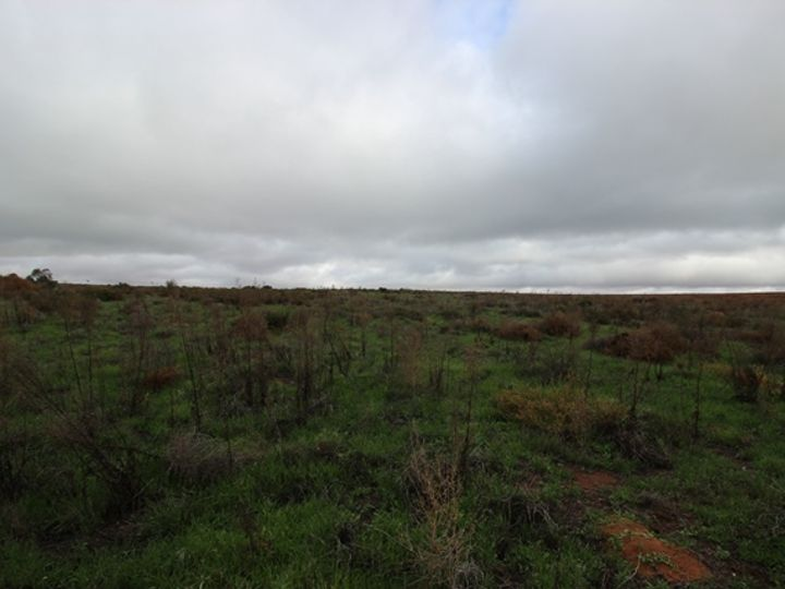 Lot 4 Waikerie Cadell Road, Waikerie, SA