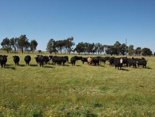 LIVESTOCK PROPERTY WITH CROPPING POTENTIAL - Dandaragan