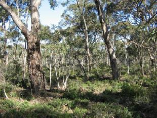 Natural Bushland Block - Western Flat