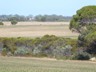 """Tamar"" - 642 Ha / 1,587 acres - Jerdacuttup"