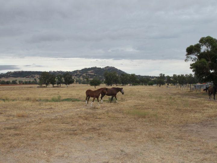 699 Kamilaroi Highway, Quirindi, NSW