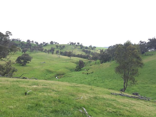 3938 Snowy Mountains Highway, Adelong, NSW