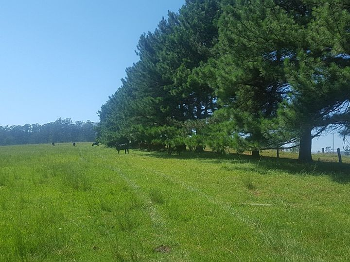 200 Camp Creek Road, Lowanna, NSW
