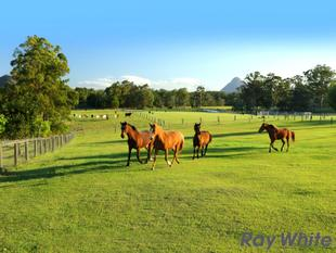 Sunshine Coast Hinterland, 160* Acres Close to Tourist Parks - Beerwah