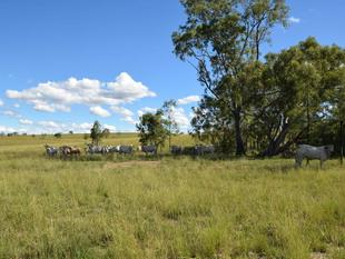 Stirling Farm - 260 Acres Position and Fattening - Biarra