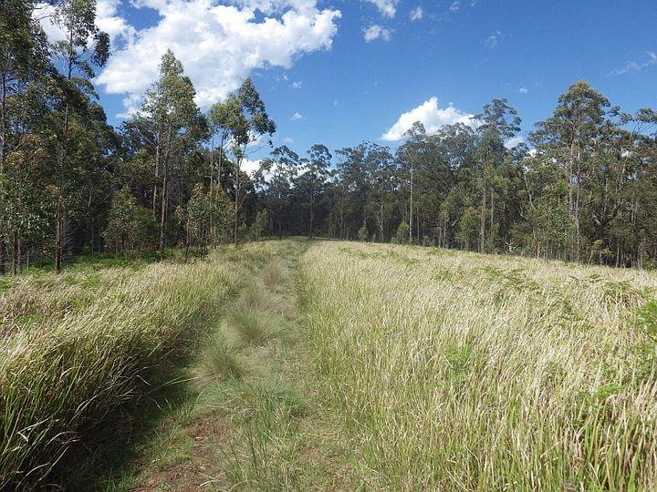 640 Harness Cask Road, Tyringham, NSW