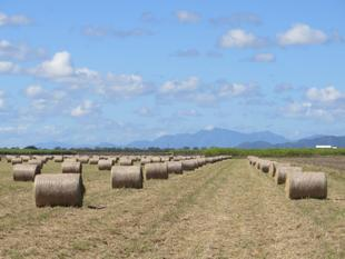 TOP HAY PRODUCER WITH SOME CANE & POTENTIAL - Home Hill