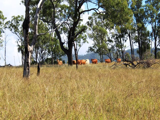 Lot 61 Cherry Lane, Ivory Creek, QLD