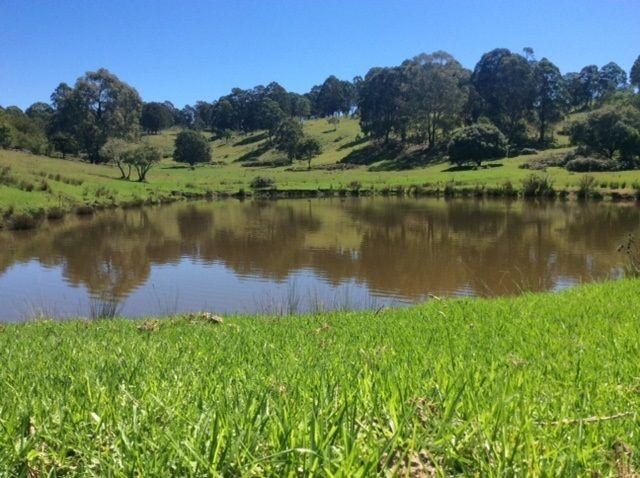 Ebor, NSW