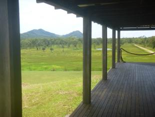 Watch the cattle graze - Cooktown