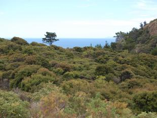 In the bush in Awana - Great Barrier Island