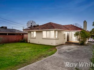 SUN SPLASHED SINGLE LEVEL LIVING - Glen Waverley