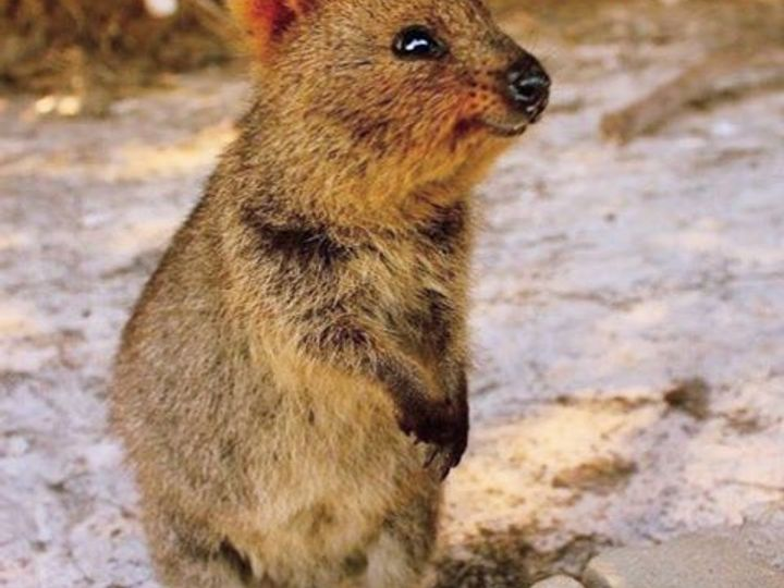 Lot 74 Quokka Place, Mira Mar, WA