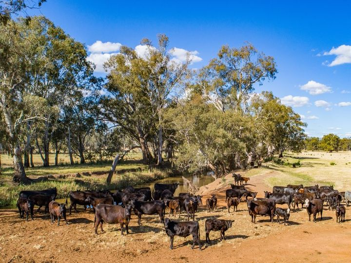 Packwood 5798 Lachlan Valley Way, Condobolin, NSW