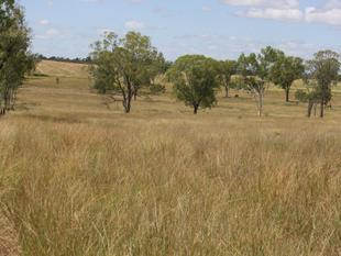 Open Scenic Views Over this 38 Acres - Mundubbera