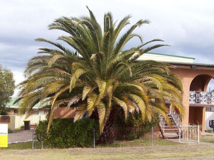 2/10 High Street, Inverell, NSW