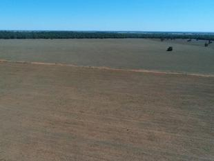 High and Dry with Occasional Water Views - Condobolin