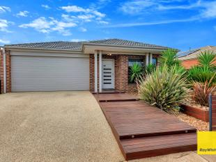 Big 5 Bedder -  Family Entertainer (560 Sqm) - Tarneit