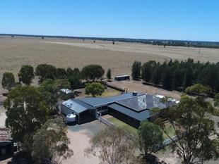 Mixed Farming Opportunity - Trundle District - Bruie Plains
