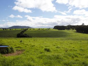 Price Reduced - 138* Acres in North Dorrigo with Little Murray frontage - Dorrigo