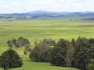Big Flat Land - Beef Farming in Town - Hikurangi